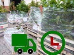 Pflanzenlieferung am nächsten Tag