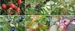1100 Wildsträucher und Heister in Sorten