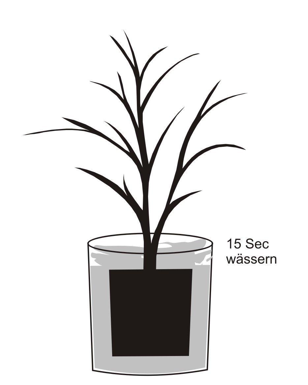 Pflanzanleitung - Pflanze vorher in Wasser eintauchen