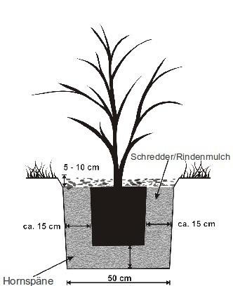 Pflanzanleitung - so wird eingegraben